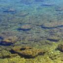 Kust, stenen in water.