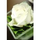 Witte bloem, decoratie