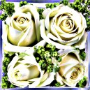 Witte bloemen, paarse rand. Ruw.
