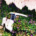 Auto in bloemen