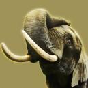 Olifant, bruine achtergrond.