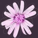 Lichtroze bloem, donkere achtergrond. Witte lijnen.