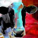 Koe, donker rode achtergrond.