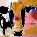 Koe, oranje hoofd.